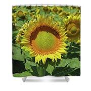 Sunflower And Honeybee July Two K O Nine Shower Curtain