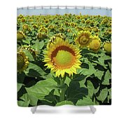 Sunflower And Honeybees July Two K O Nine  II Shower Curtain