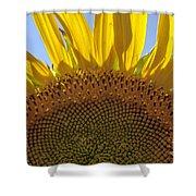 Sunflower Arch Shower Curtain