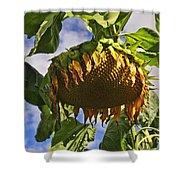 Sunflower At Fall Shower Curtain