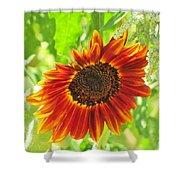 Sunflower Beauty Shower Curtain
