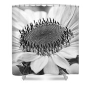 Sunflower Bloom Black And White Shower Curtain