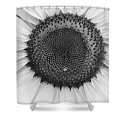 Sunflower Center Black And White Shower Curtain