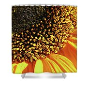 Sunflower Edge Shower Curtain