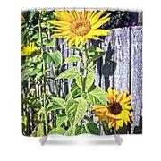 Sunflower Fence Shower Curtain