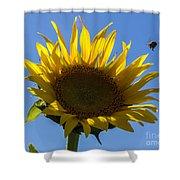 Sunflower For Snack Shower Curtain