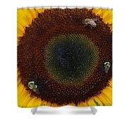 Sunflower Gathering Shower Curtain