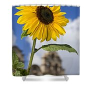 Sunflower In Balboa Park Shower Curtain