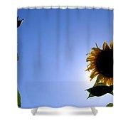 Sunflower In The Sun Shower Curtain