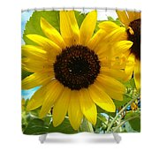 Sunflower Medley Shower Curtain