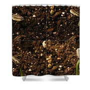 Sunflower Seedling Growth Sequence Shower Curtain