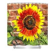 Sunflower Sfwc Shower Curtain