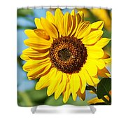 Sunflower Small File Shower Curtain