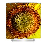 Sunflower Sunburst Shower Curtain