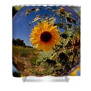 Sunflower Through A Glass Eye Shower Curtain