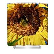 Sunflower Up Close Shower Curtain