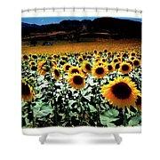 Sunflowers At Dusk Shower Curtain