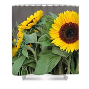 Sunflowers At Pikes Market Shower Curtain