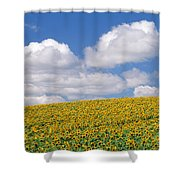 Sunflowers, Austin, Manitoba Shower Curtain
