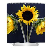 Sunflowers Three Shower Curtain