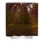 Sunlight And Leaves Shower Curtain