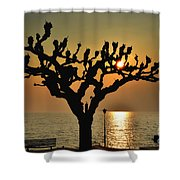 Sunlight And Tree Shower Curtain
