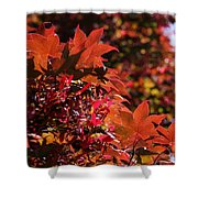 Sunlight Autumn Leaves Shower Curtain