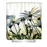Sunlight Behind The Daisies Shower Curtain
