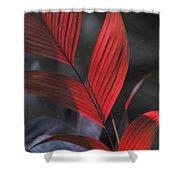 Sunlight Illuminates The Red Leaves Shower Curtain