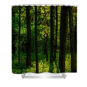 Sunlight In Forest Shower Curtain