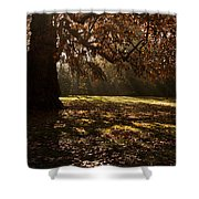 Sunlight In Trees Shower Curtain
