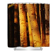 Sunlight On Aspen Trees, Twin Falls Shower Curtain