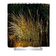 Sunlight On Grass Merritt Island Nwr Shower Curtain