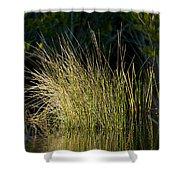 Sunlight On Grass Original Shower Curtain