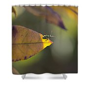 Sunlight On The Tip Shower Curtain