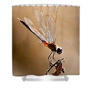 Sunlight Through Golden Wings Shower Curtain