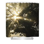Sunlight Through Tree Cahir, County Shower Curtain