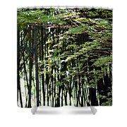 Sunlit Bamboo Shower Curtain