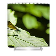 Sunlit Dragonfly Shower Curtain
