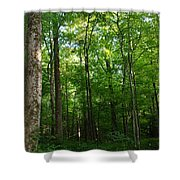 Sunlit Forest Shower Curtain
