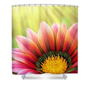 Sunny Daisy Shower Curtain by Carlos Caetano