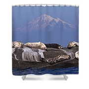 Sunny Days Are Here Again Shower Curtain