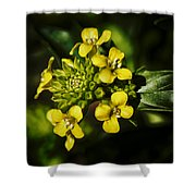 Sunny Floret Shower Curtain