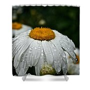 Sunny Sides Up Shower Curtain