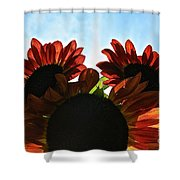 Sunny Trio Shower Curtain