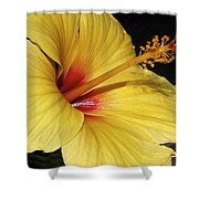 Sunny Yellow Hibiscus Flower Shower Curtain