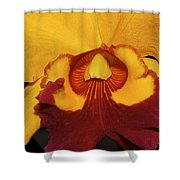 Sunny Yellow Orchid Shower Curtain