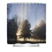 Sunray Through Trees And Fog Shower Curtain