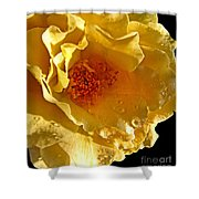 Sun Rays On The Yellow Petals Shower Curtain