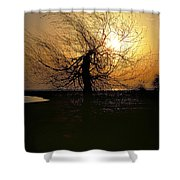Sunrise And Tree Shower Curtain